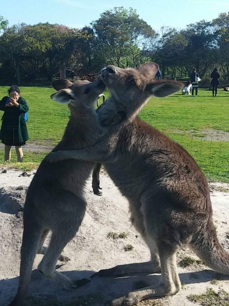 Avustralya - Melbourne